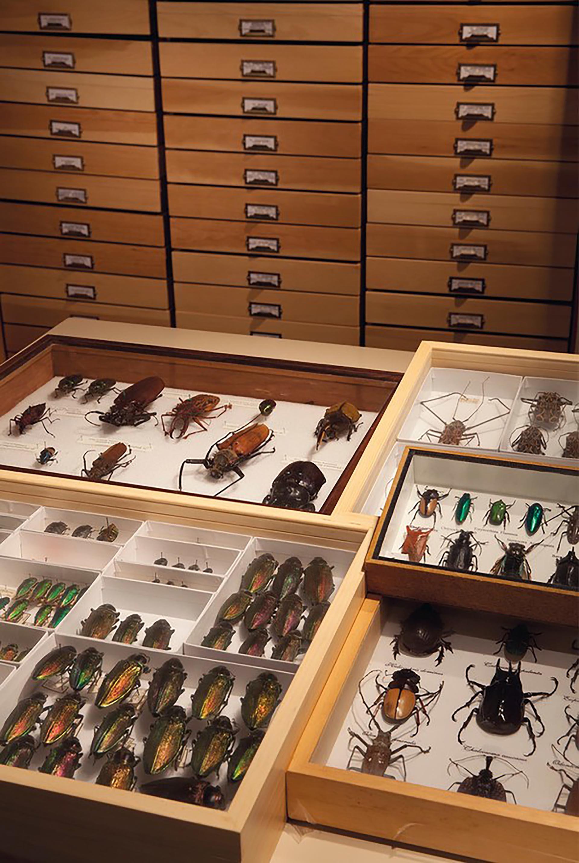 Rockefeller también tenía una fascinación por los escarabajos, con decenas de miles de ejemplares