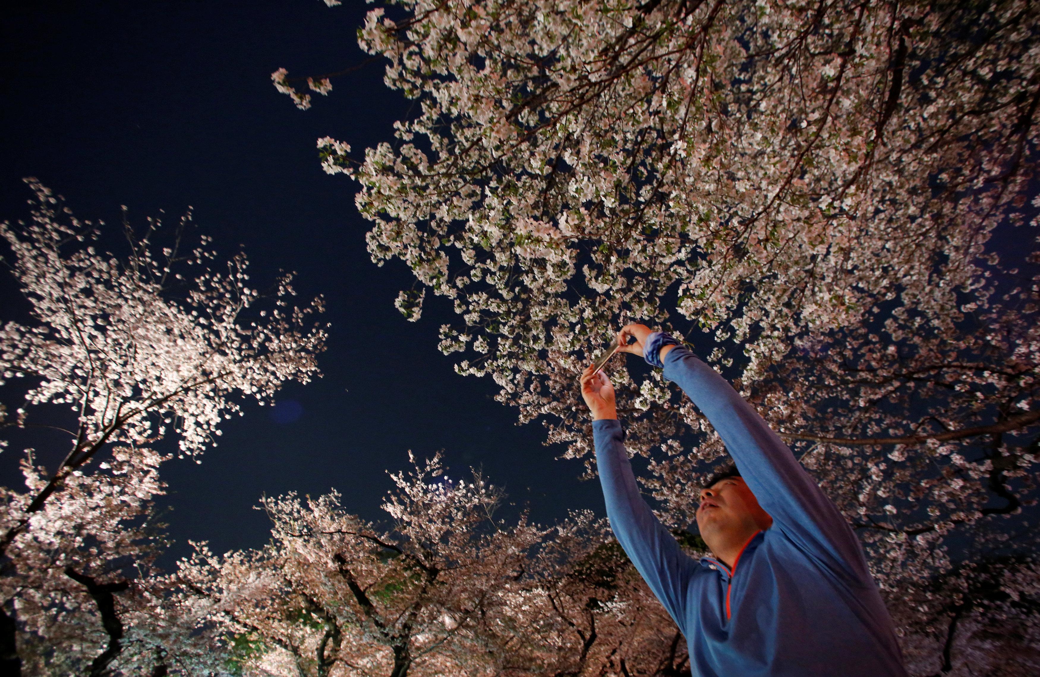 El parque Ueno en Tokio (Reuters/Issei Kato)