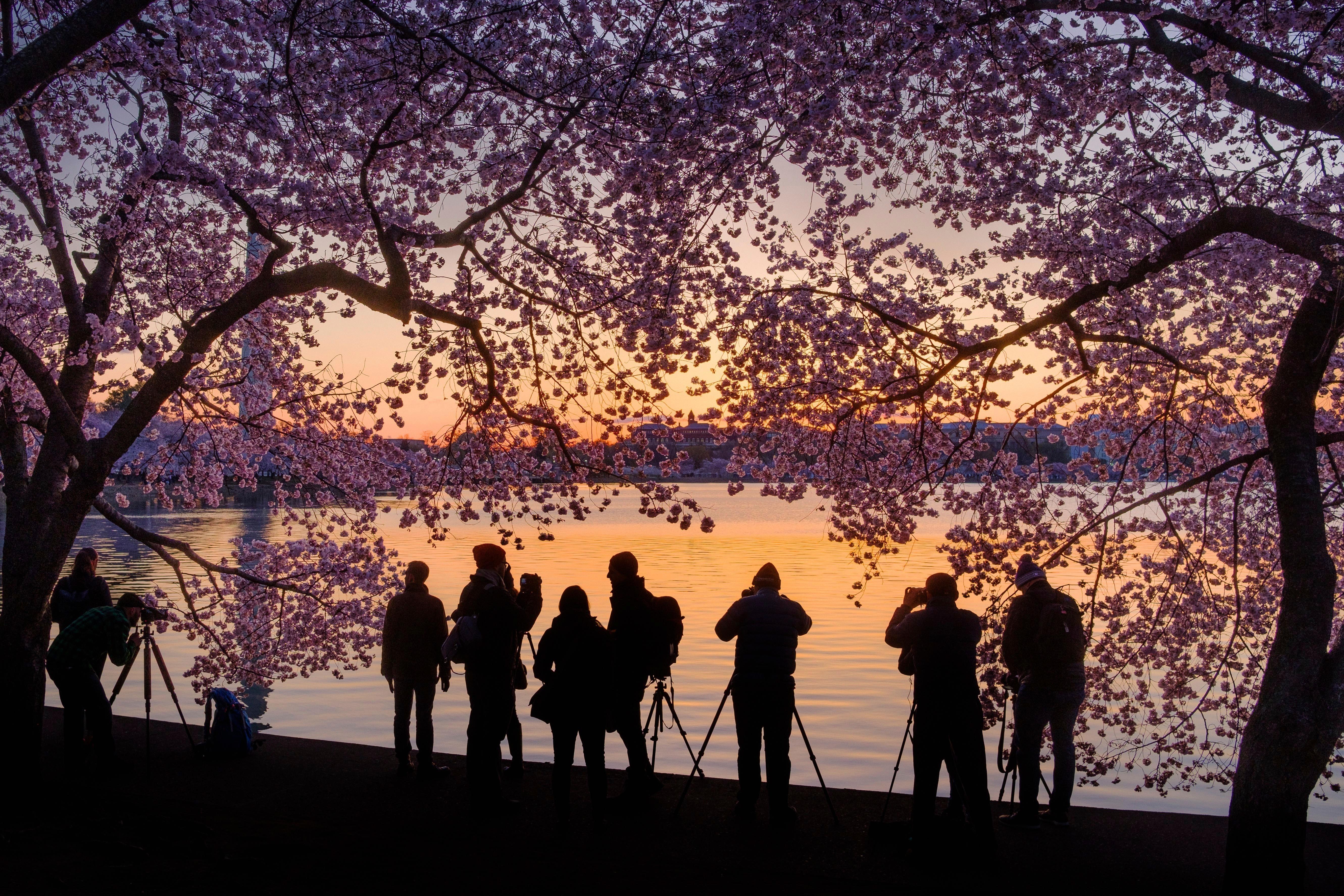 Fotógrafos en el lago Tidal Basin en Washington (AP/J. David Ake)