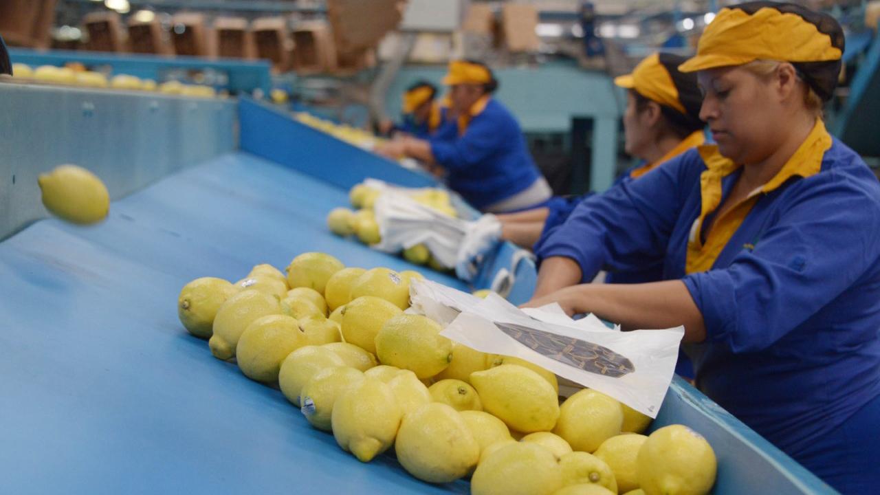 La última vez que se exportaron limones a Estados Unidos fue en 2001