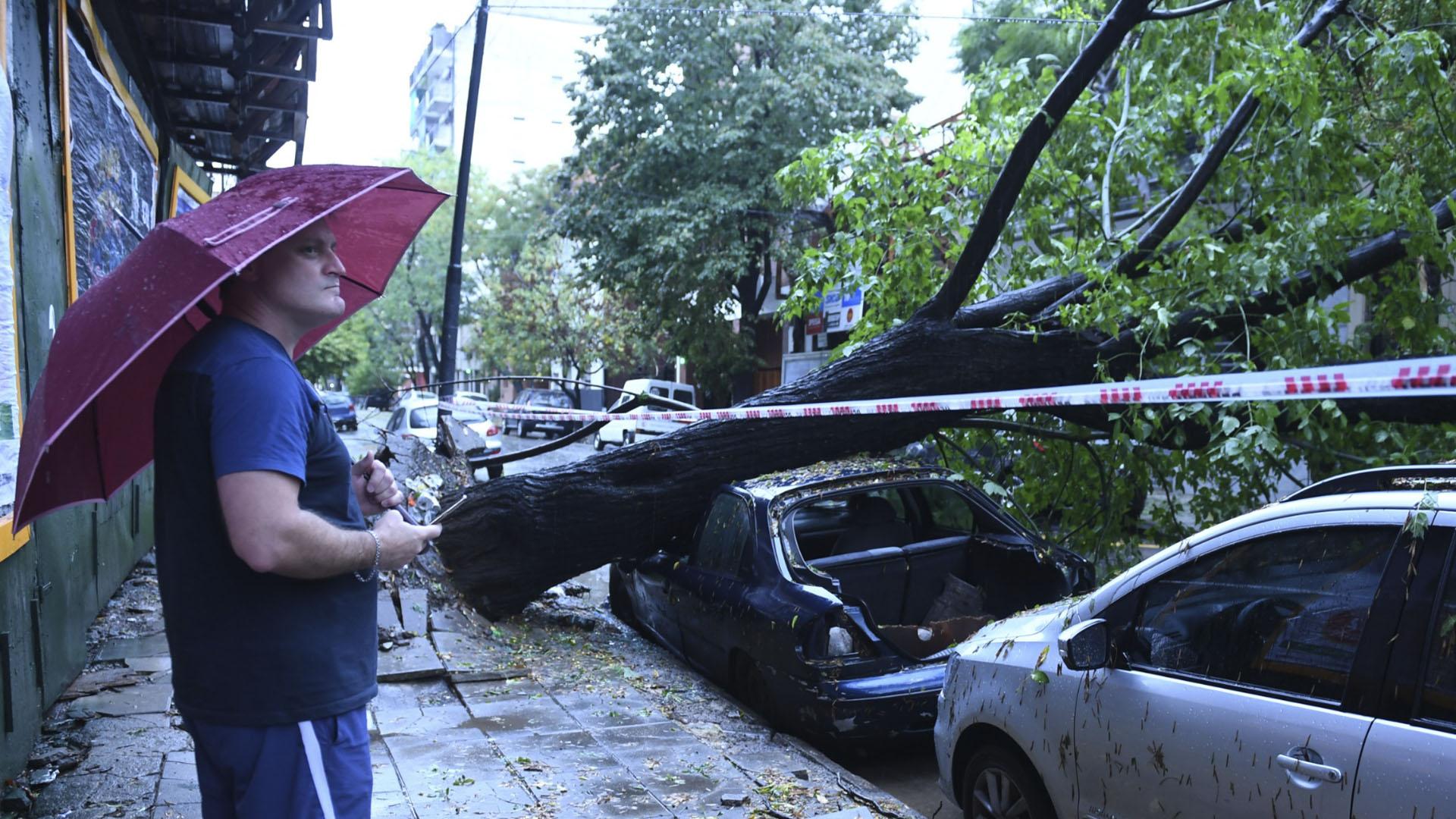 Uno de los tantos árboles que se también se cayeron e impactaron contra autos estacionados