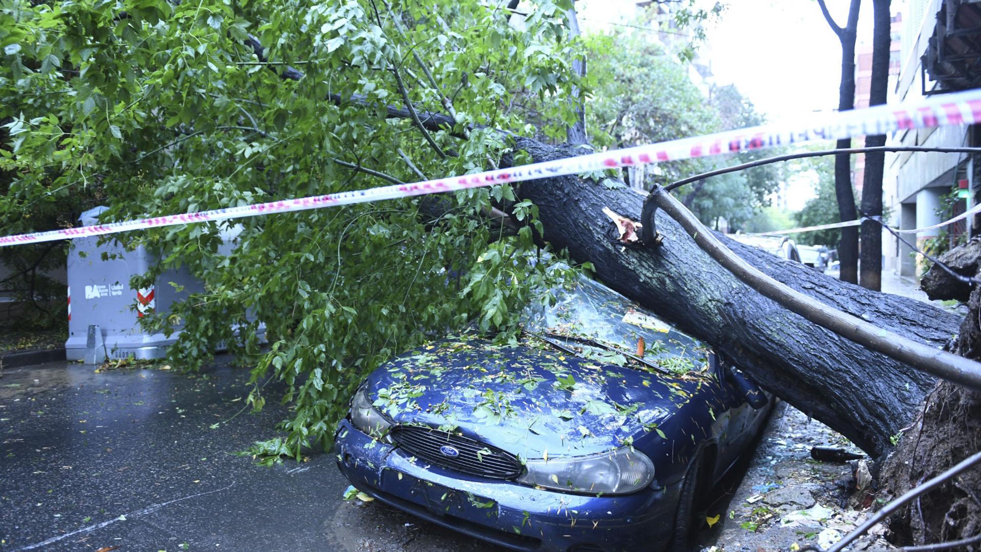 Árbol caído luego del temporal en Muñiz al 800 en Capital Federal