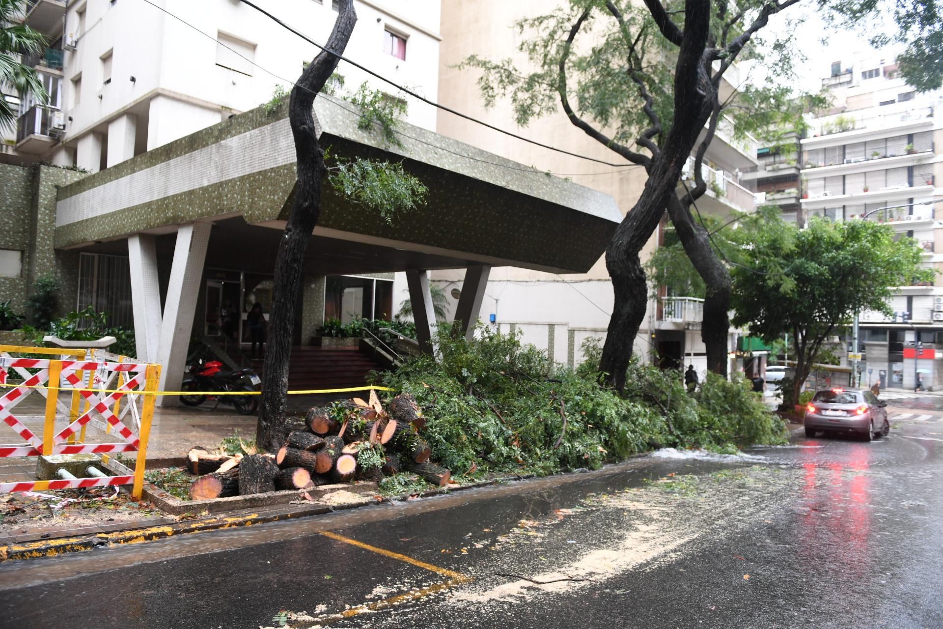 Gran cantidad de árboles cayeron en Capital Federal, anegando varias calles porteñas