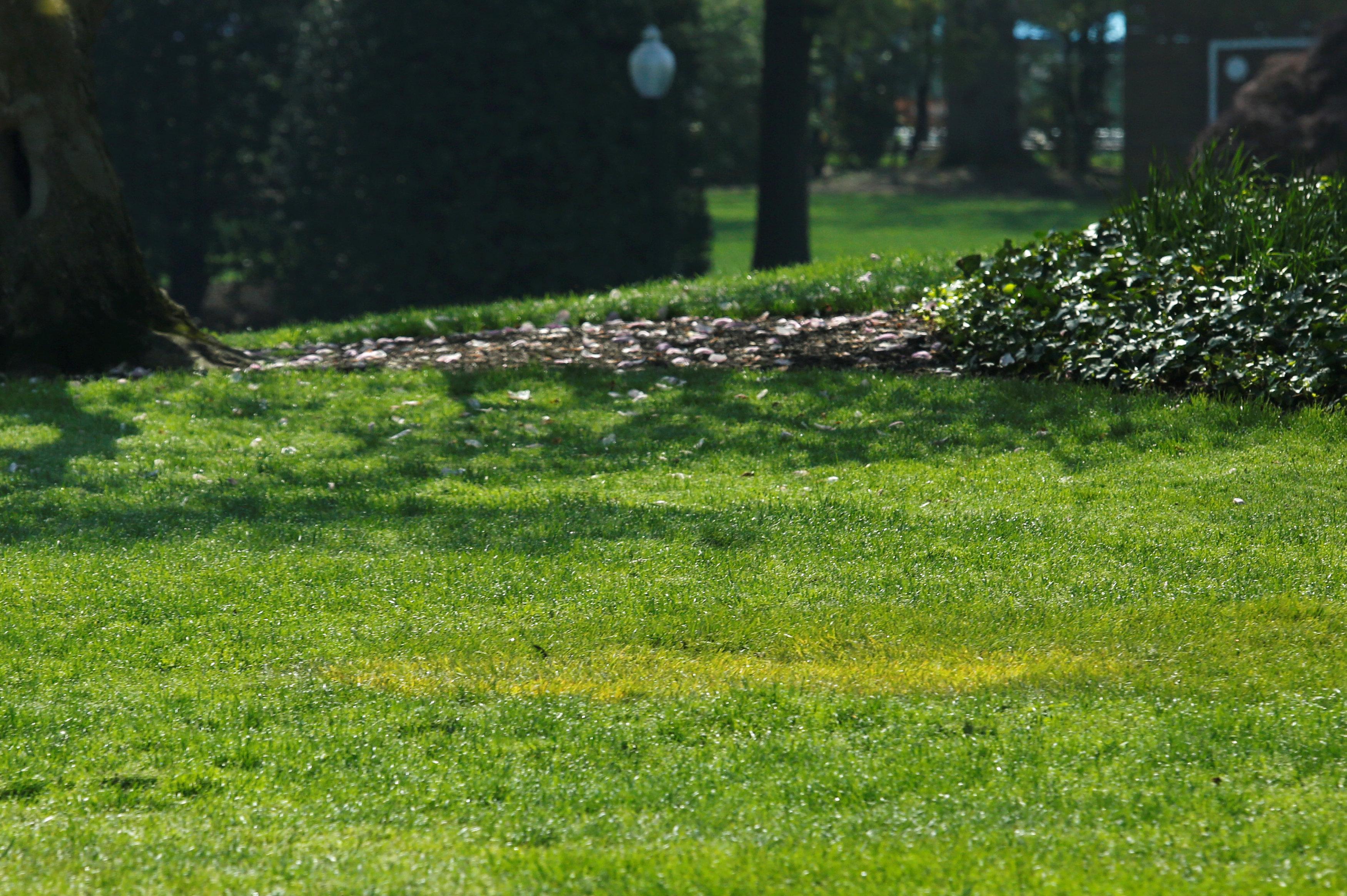 Una mancha amarilla en el lugar en el que debería estar el roble, que provenía de un bosque del norte de Francia en el que unos 2.000 marines estadounidenses murieron durante la Primera Guerra Mundial (REUTERS/Yuri Gripas)