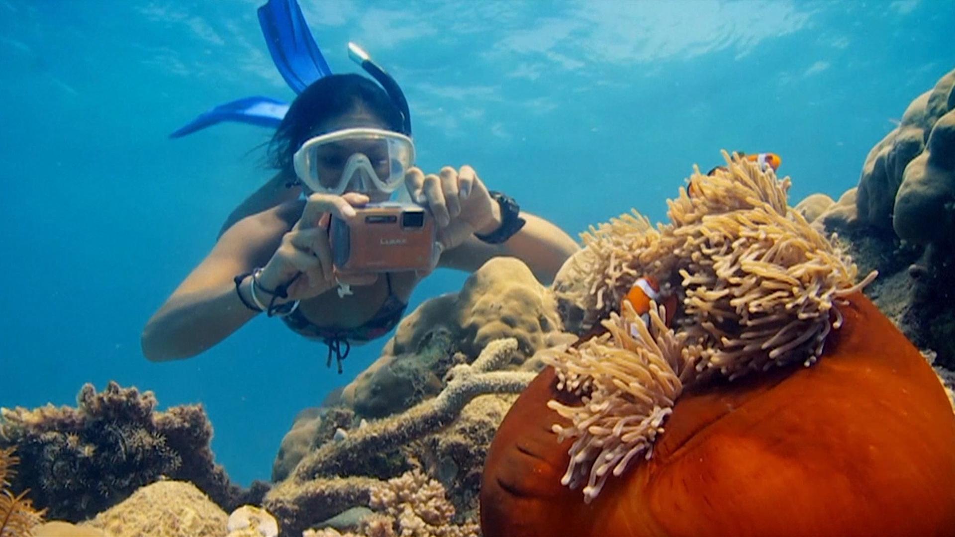 Cada año, más de dos millones de turistas armados de máscaras de esnórquel y aletas de buceo se dirigen a la Gran Barrera de Coral