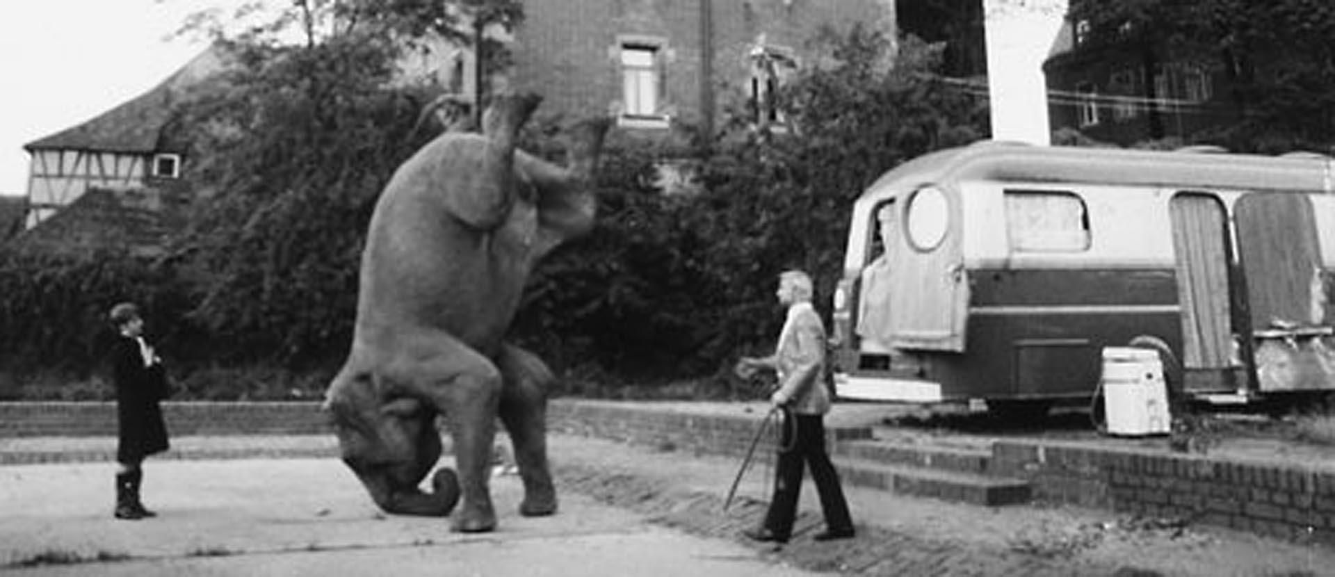Los artistas bajo la carpa del circo: perplejos