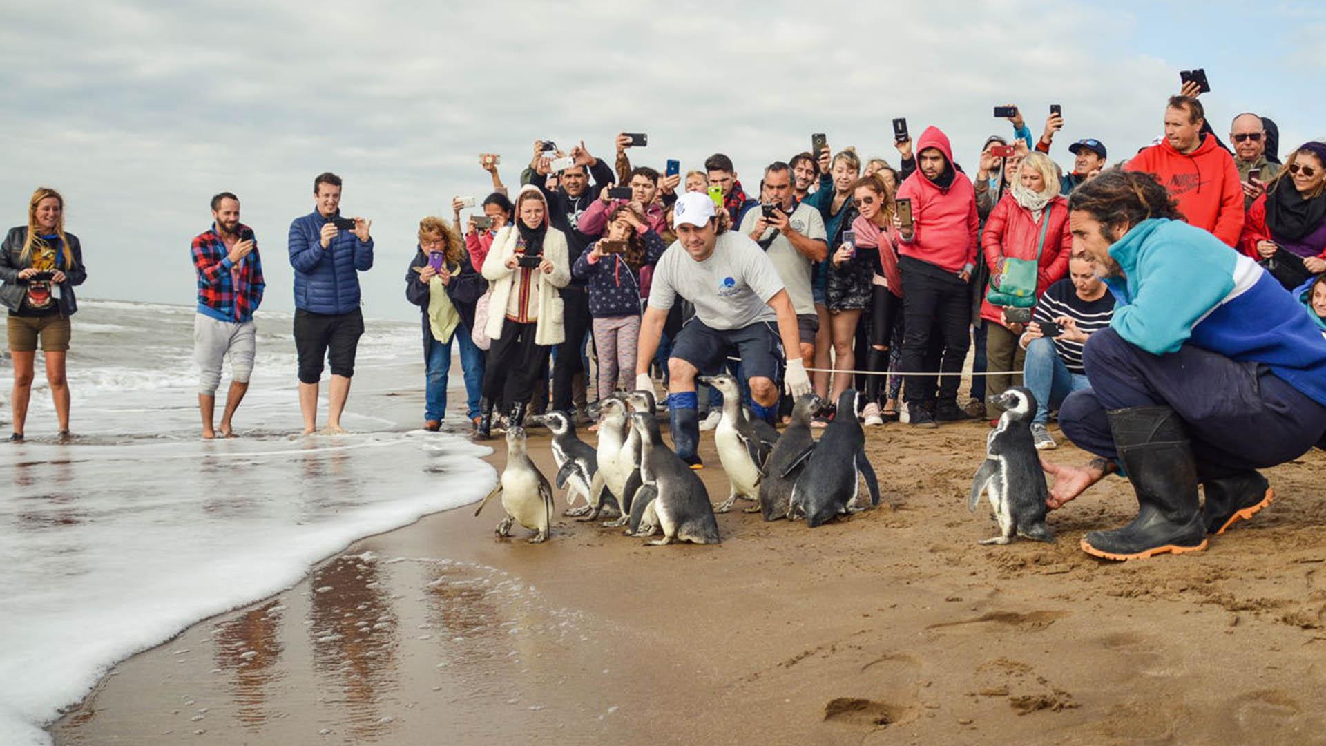 Dorable Páginas De Pingüino De Club Para Niñas Modelo - Dibujos Para ...
