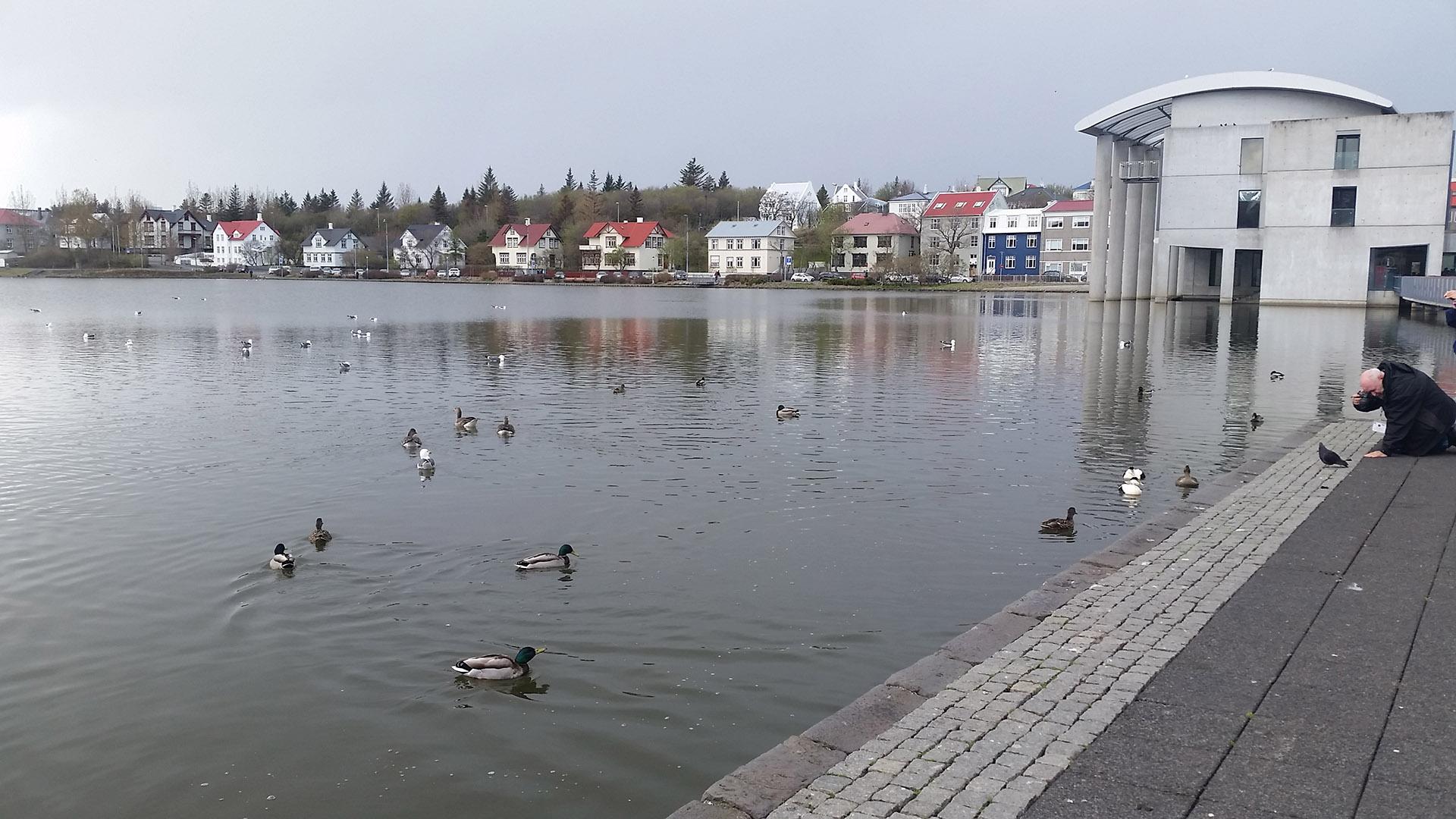 Tjörnin, un enorme lago en pleno centro. A un costado, el ayuntamiento