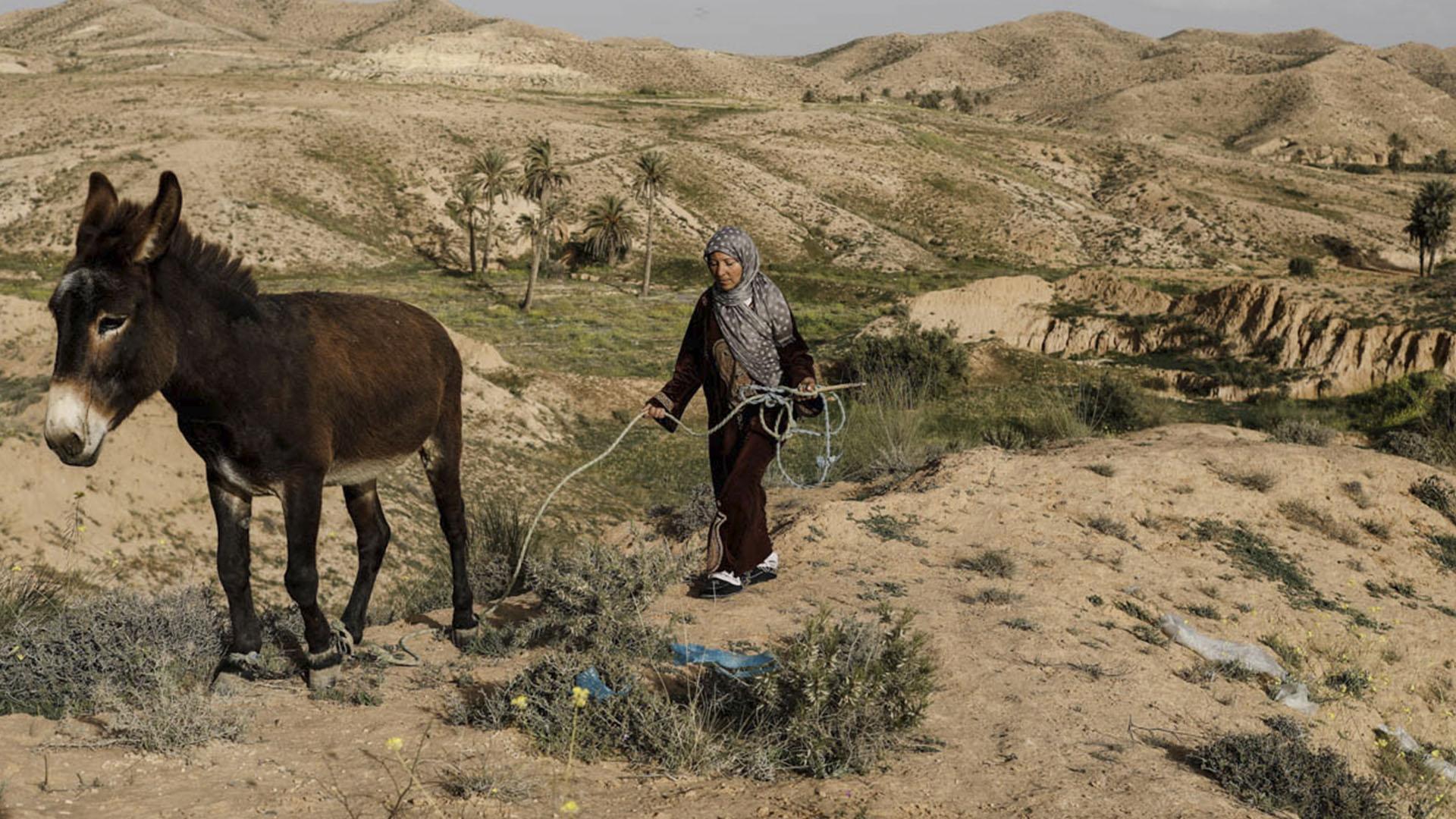 Una mujer dirige a su burro en dirección a sus casa subterránea