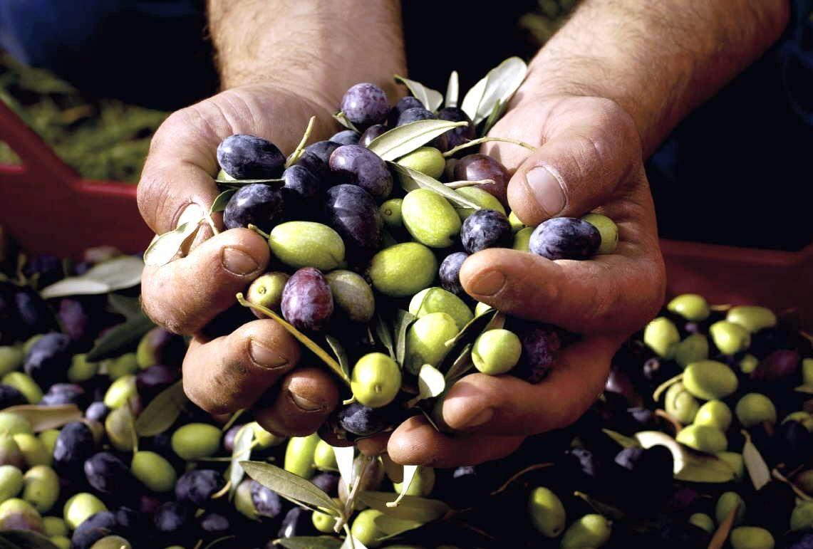 Alrededor del 70% de la producción olivícola se exporta y el resto se destina a consumo interno. El acuerdo entre el Mercosur y Egipto hizo perder el mercado brasileño