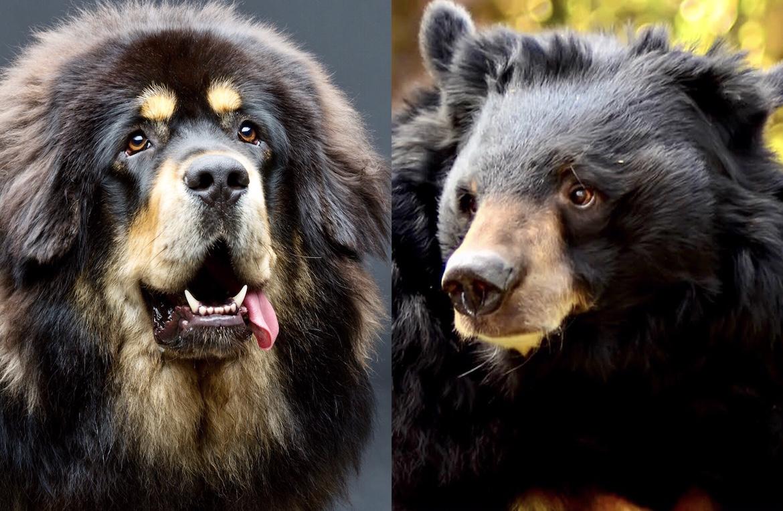 Las similitudes entre ambas especies son sorprendentes