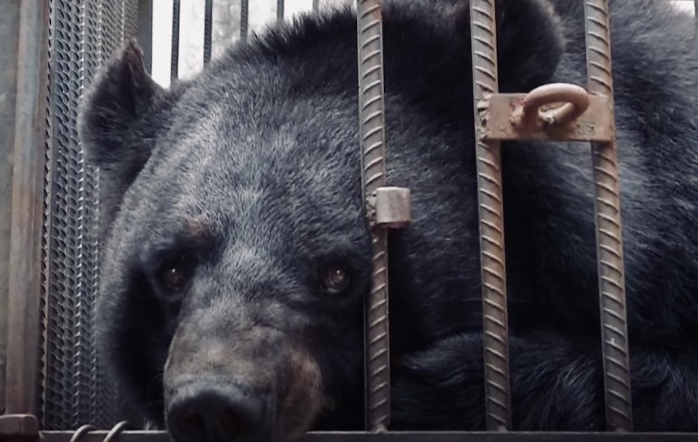 El oso de dos años fue trasladado a un refugio local en buenas condiciones de salud