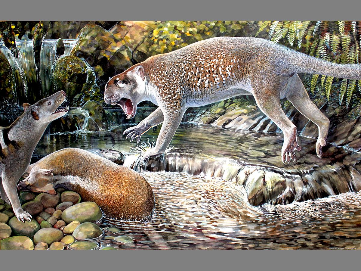 El león marsupial descrito en Australia este año habitó esa región del globo en el Oligoceno tardío, una etapa que terminó hace unos 23 millones de años