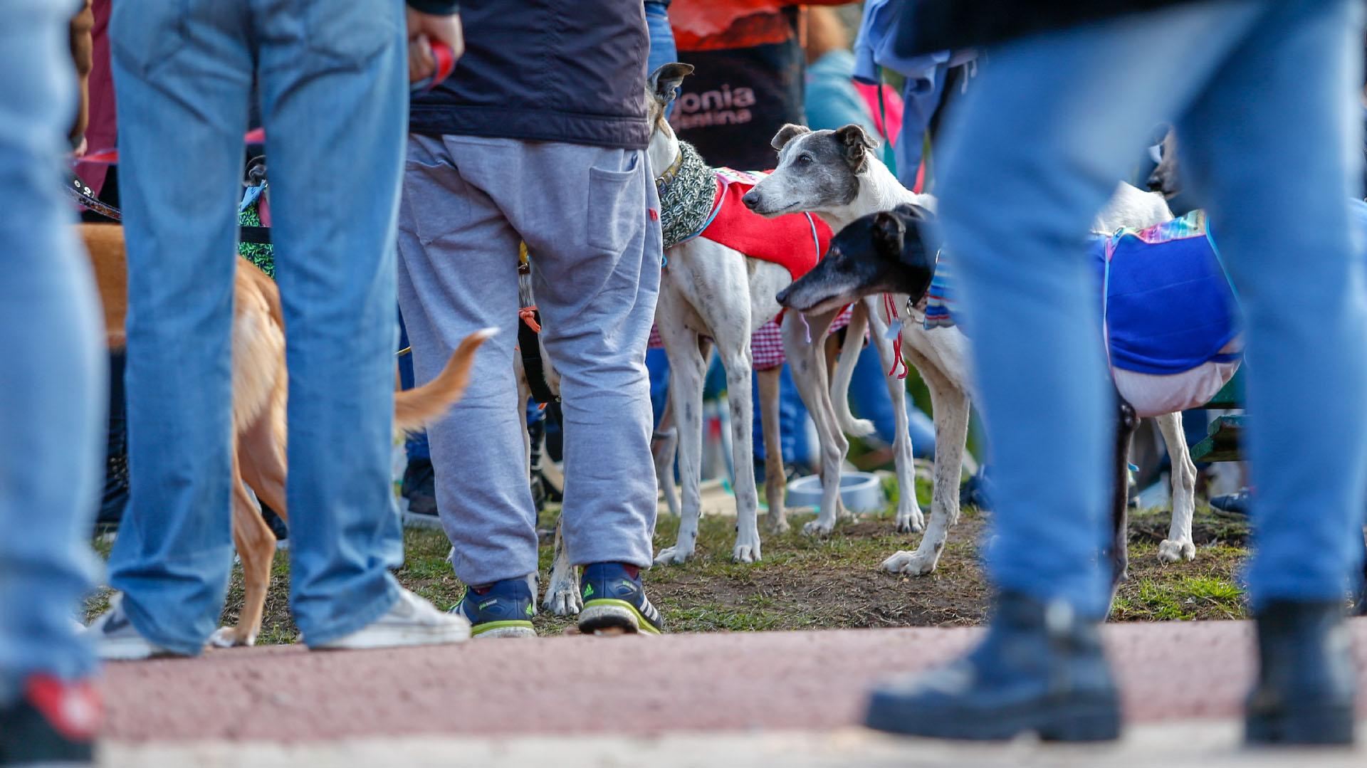 """El presidente Mauricio Macri se manifestó a favor de la iniciativa para """"terminar con las carreras de galgos en todo el país, para evitar que se siga lucrando con el sufrimiento de los animales""""."""