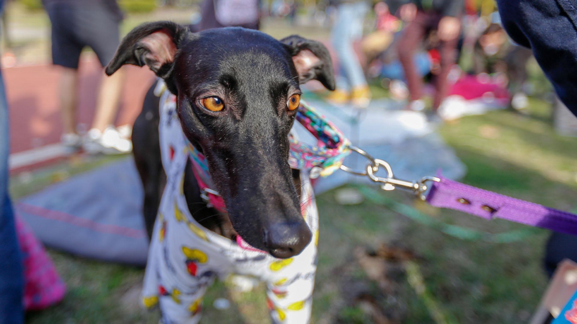 """La Ley 27330 fijó que """"queda prohibido en todo el territorio nacional la realización de carreras de perros, cualquiera sea su raza"""""""
