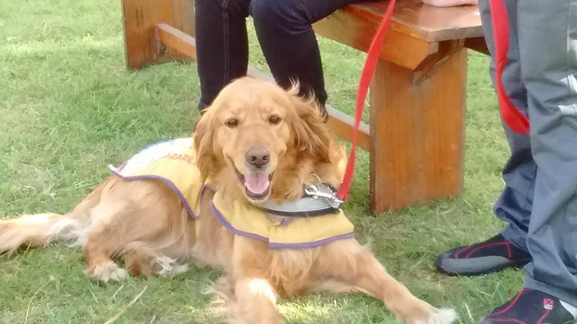 Canela se acercó a María Sol hace cinco años, se recostó en sus pies y desde entonces no se separó de ella (Facebook Perros guía)