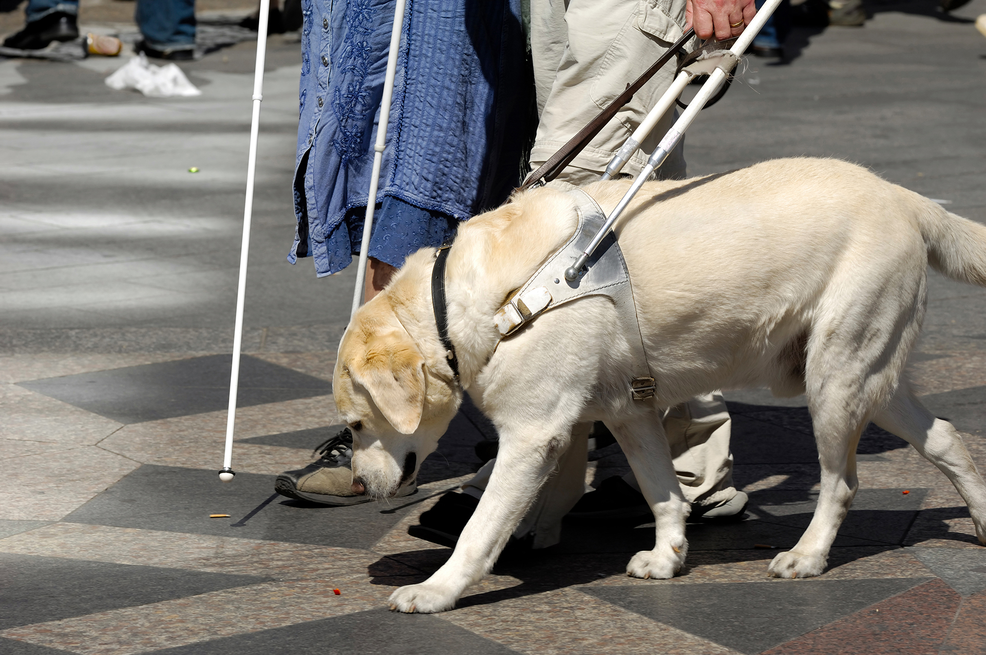 El proceso de adaptación del perro guía no es complejo, pero requiere de un tiempo de adaptación entre el can y quien será el dueño (Getty Images)