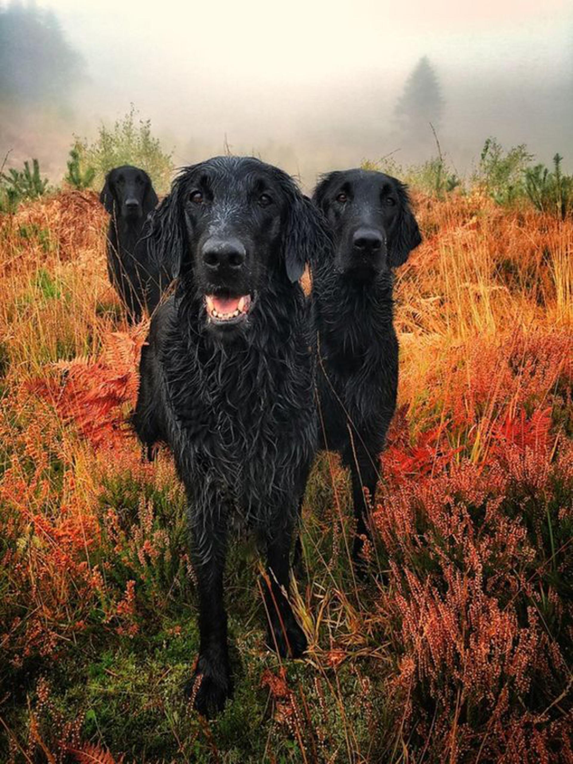 """Esta fotografía obtuvo el primer premio de """"fotografía de retrato"""". El prestigioso club que todos los años reconoce a los fotógrafos lleva 13 años destancando los mejores retratos y situaciones que viven a diario los caninos (Carol Durrant)"""