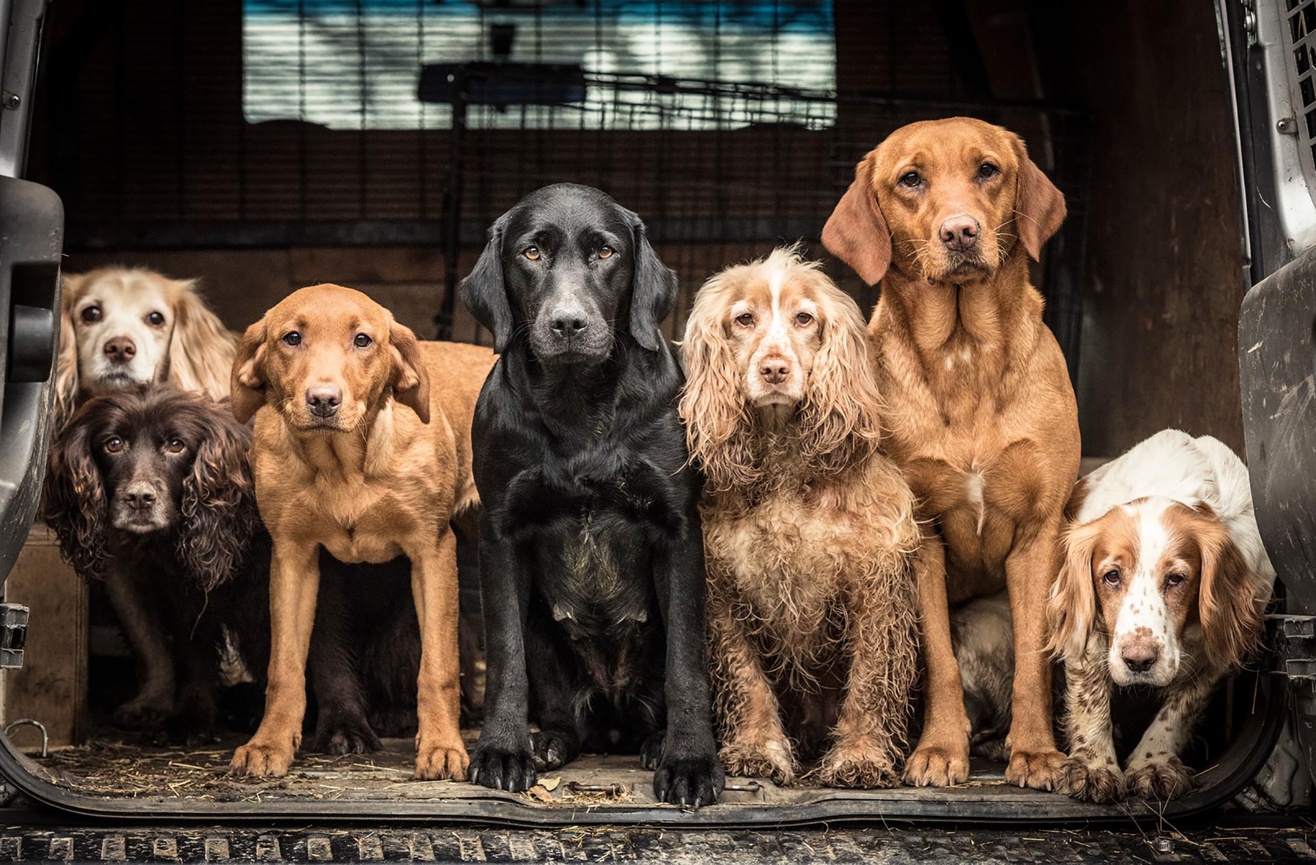 Dentro de las categorías que premiaron se encontraba la de perros trabajando. La autora de la fotografía logró retratar el momento exacto en el que Skye, Jenny, Pippin, Milly, Bramble, Ember y Bonnie se encontraban listos para salir de la camioneta (Tracy Kidd)