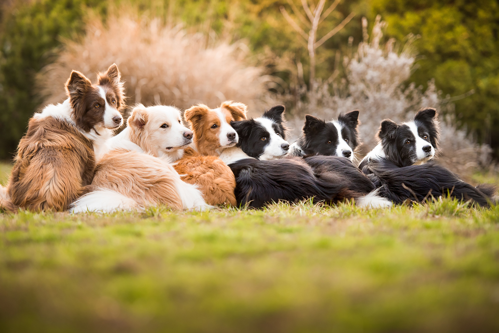 """""""Un solo corazón, una sola familia"""" es el título de la imagen de los seis border collie que obtuvieron el primer puesto en la categoría, """"amamos a los perros porque"""", todos tienen entre 11 y 17 años. (Tamara Kedves)"""