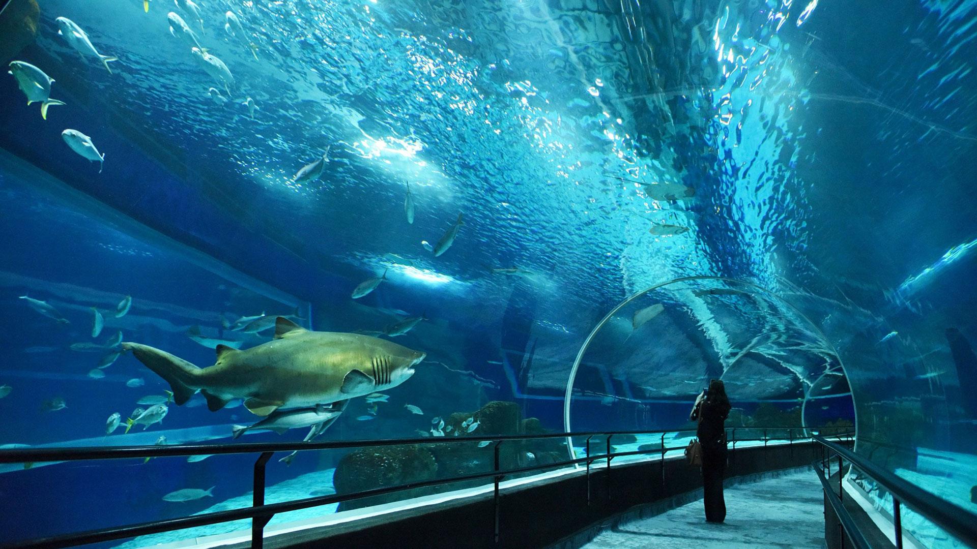 AquaRio, el acuario más grande de América del Sur