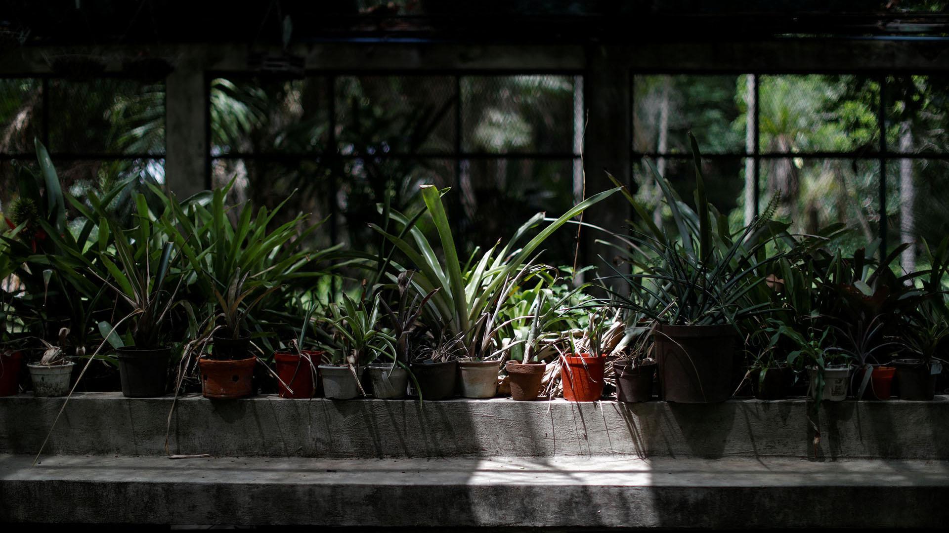 """""""No se dan las condiciones para hacer las investigaciones, primero porque no hay dinero"""", dijo Naida Avendaño, investigadora y curadora del herbario"""