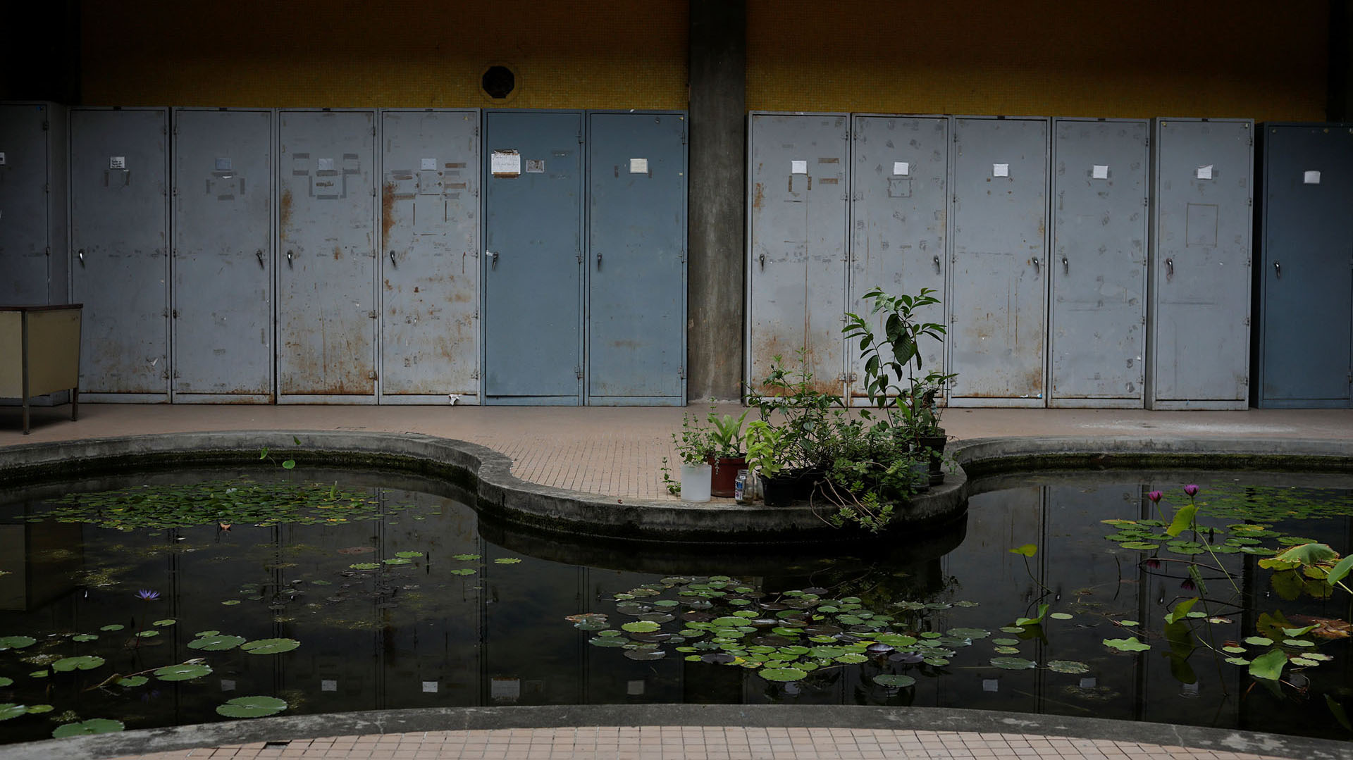 Todas las plantas del parque, que ocupa 70 hectáreas y se divide en al menos cuatro viveros distintos, han sufrido por la sequía, incluso las que están a la intemperie, por lo que la colección ha disminuido visiblemente