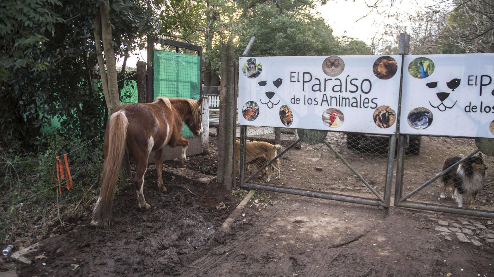 En El Paraíso de los Animales conviven especies en total libertad y ahora necesitan ayuda para construir un hospital veterinario. (Guille Llamos)