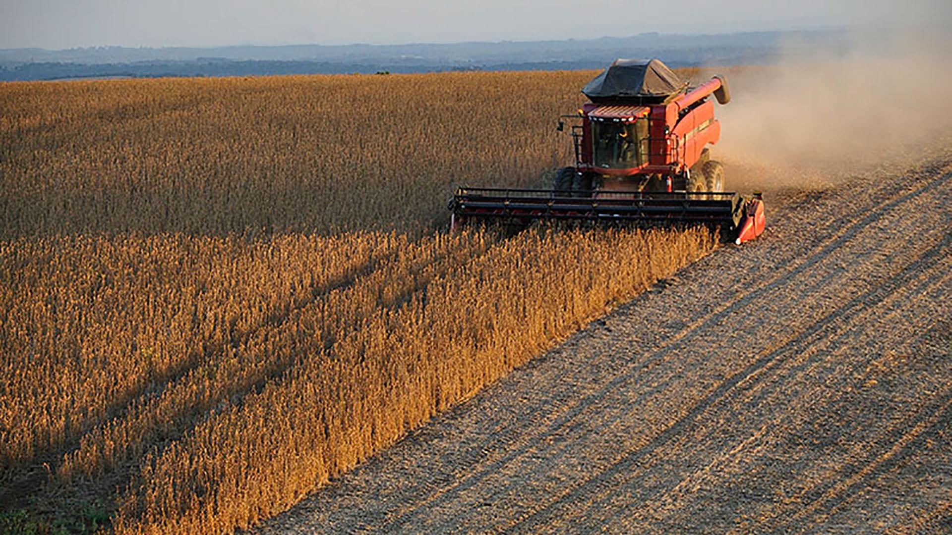 El sector agrícola estadounidense es uno de los más afectados por la guerra comercial