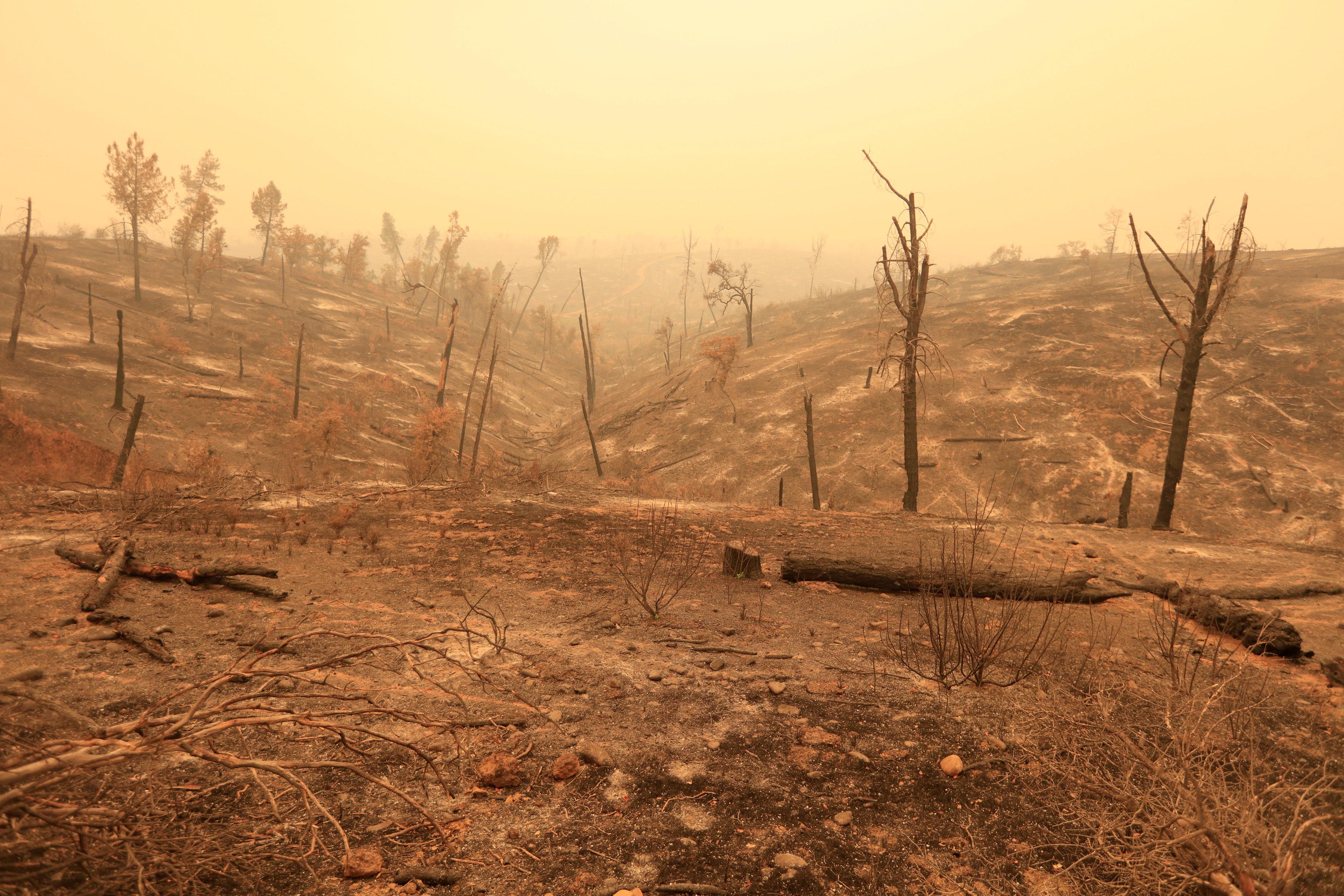 La devastación al oeste deRedding(Reuters/ Bob Strong)