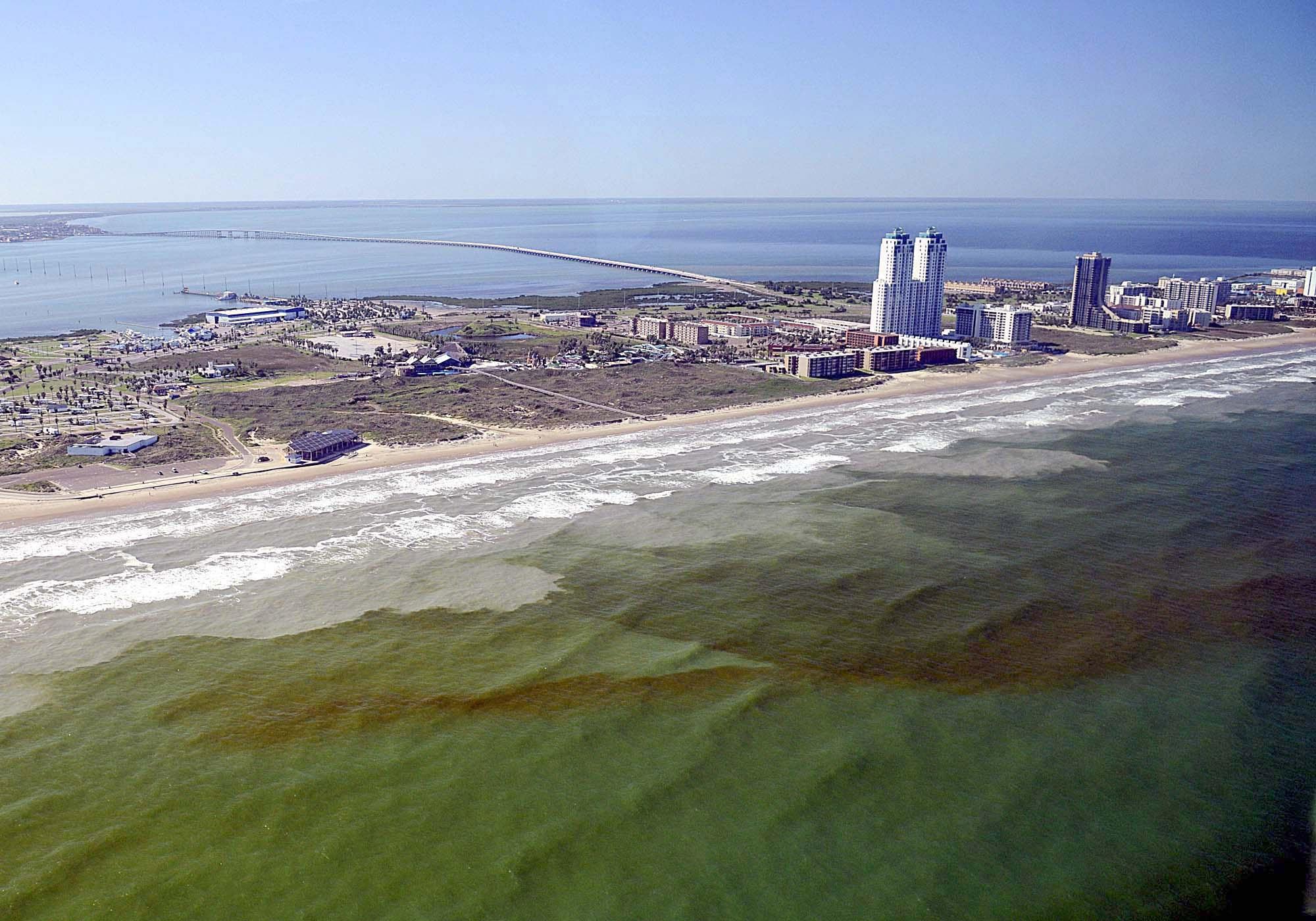 Laproliferación descontrolada de las algas tóxicas es la mayor desde 2006. (NOAA)
