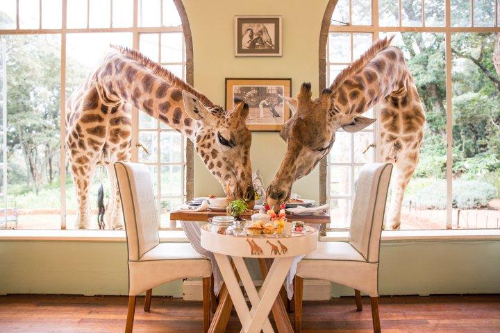 Giraffe Manor (The Safari Collection)