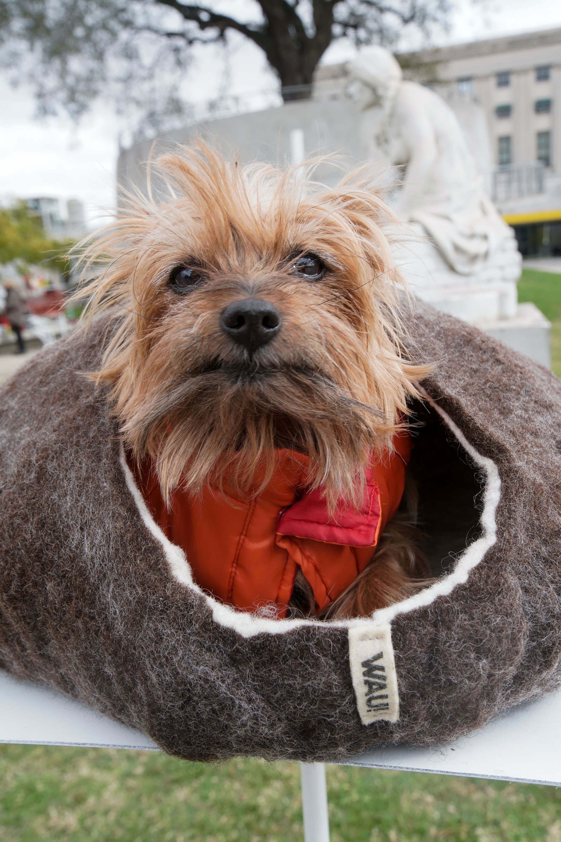Una casita abrigada para combatir los últimos fríos y que los perros convivan con sus dueños dentro del hogar