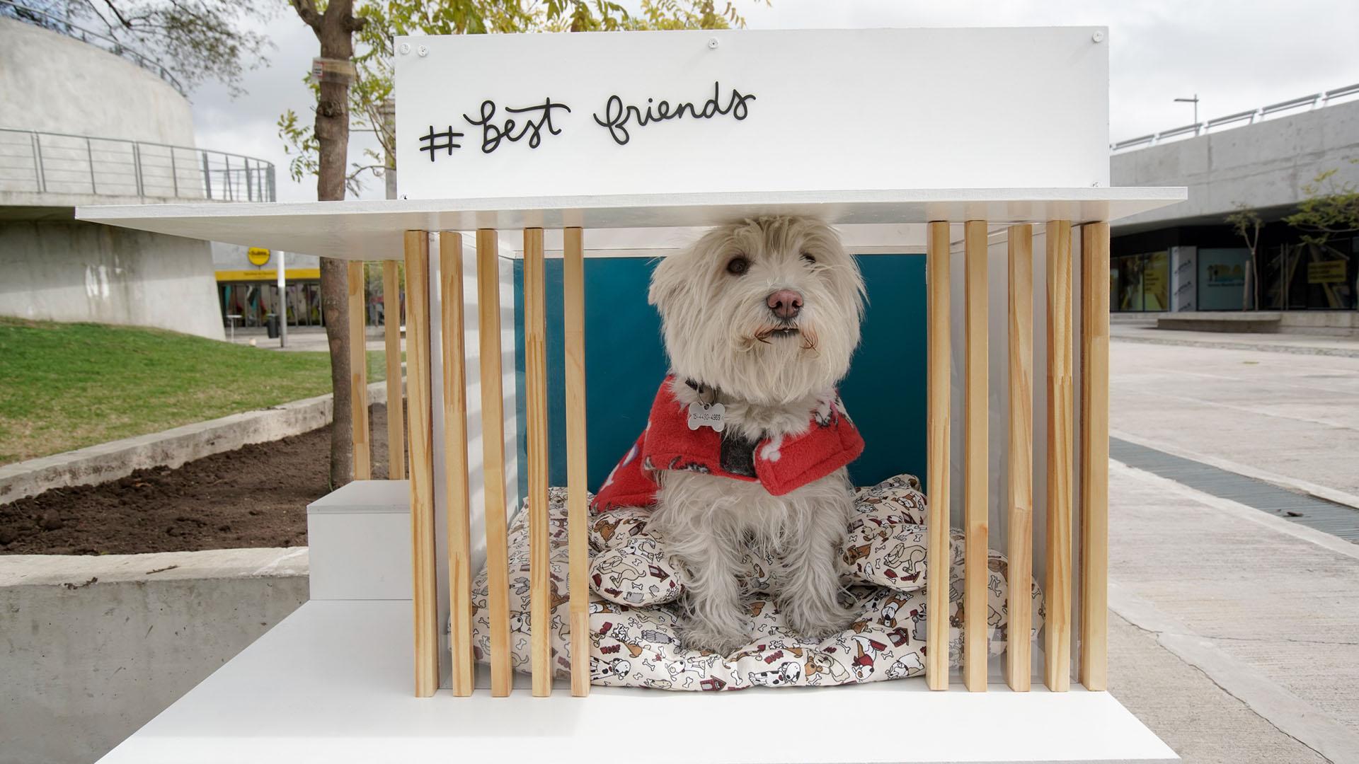"""""""Best Friend"""", por Yamila Canosa y Natalia Fereton, en maderas claras y blancas, una casa moderna para un perro pequeño"""