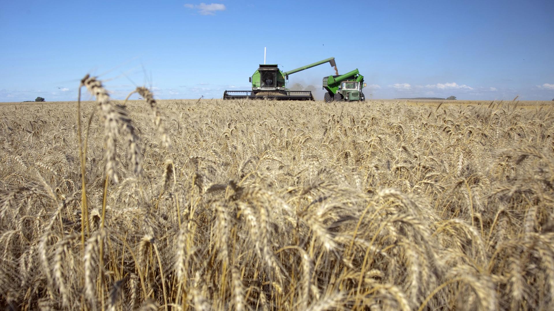 La soja, el maíz y el trigo, buscan consolidar el poder de compra de los productores