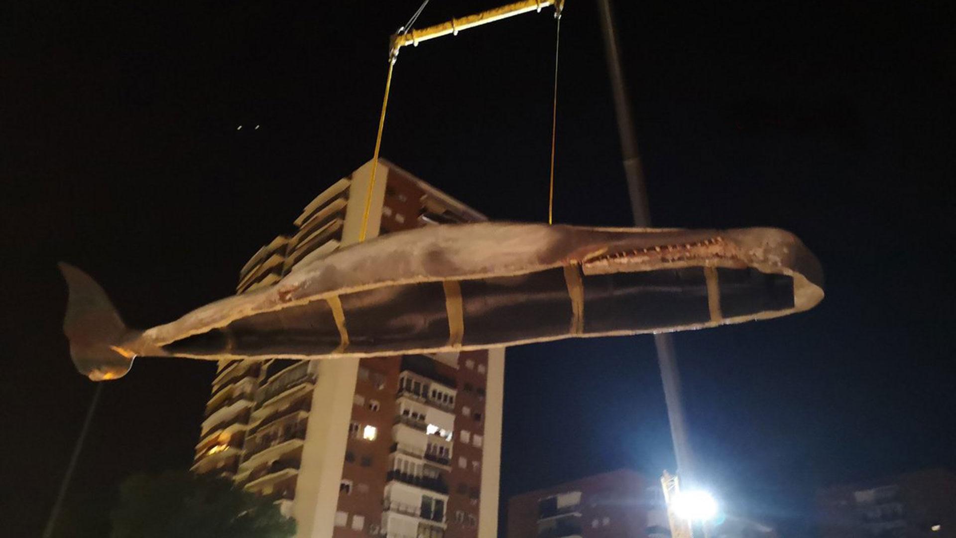 Se trata de una escultura de más de 15 metros y 1.000 kilos de peso que replica, a escala real, un cachalote macho de 18 años