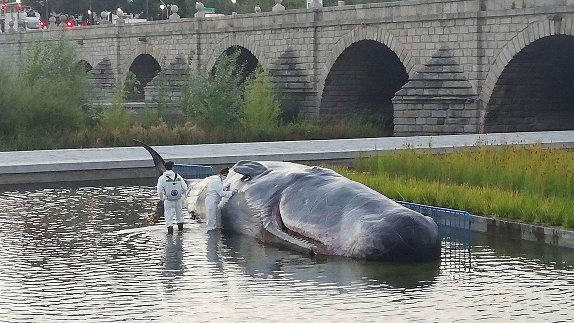 """La ballena que """"apareció"""" en Madrid"""