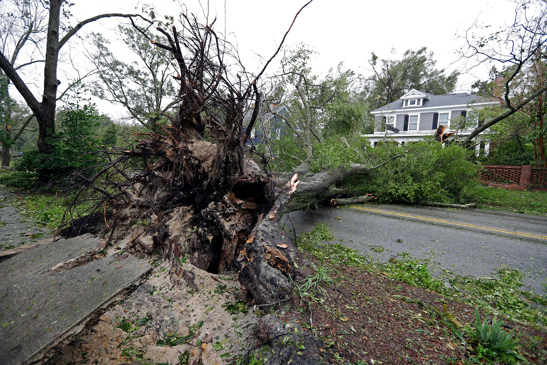 El paso del huracán dejó árboles caídos (AP)
