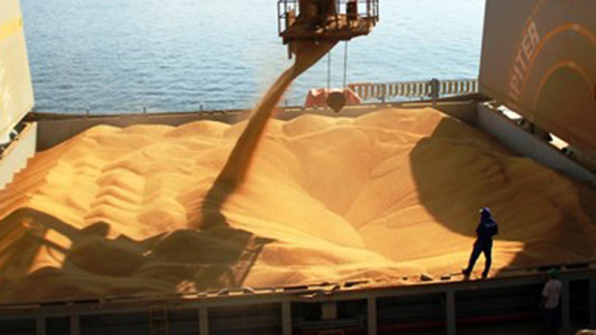 El trigo se encuentra en plena época de cosecha. Los buenos precios internacionales lo convierten en el cultivo más sólido para enfrentar los vaivenes de la economía interna