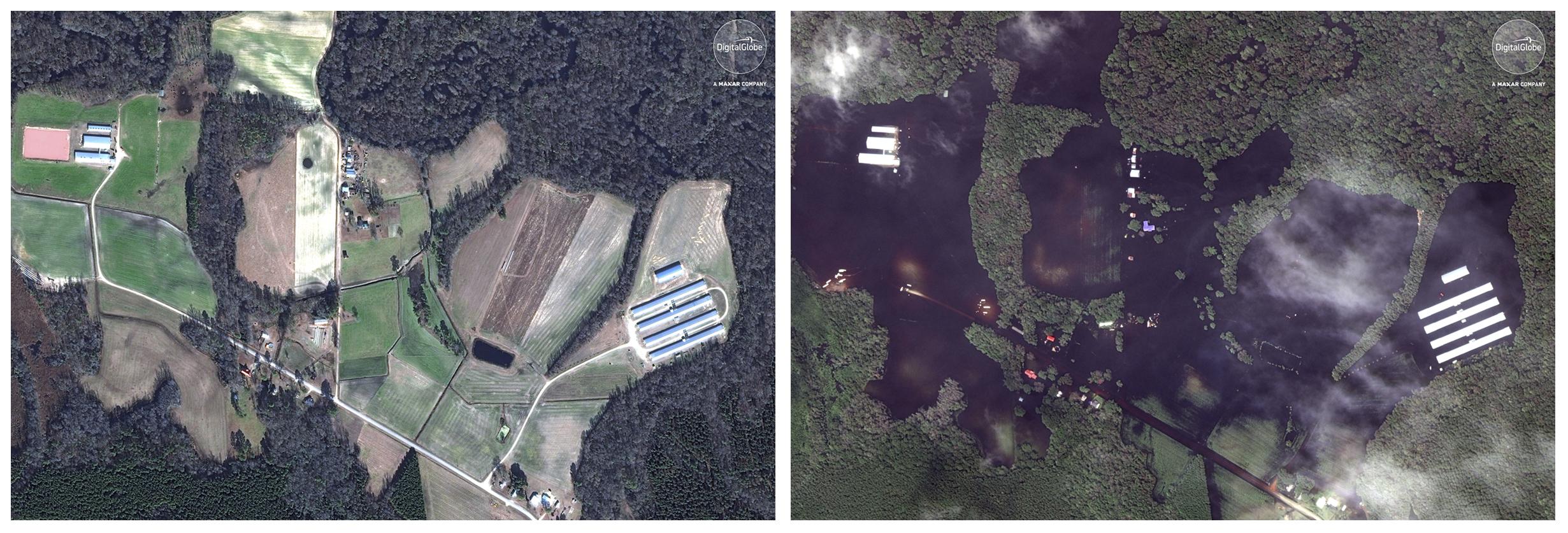 Esta combinación de imágenes satelitales muestra una granja el 13 de enero de 2017, a la izquierda, y después, a la derecha, cuando ya había pasado el huracán Florence en la zona, el 17 de septiembre, cerca de Trenton, Carolina del Norte. (DigitalGlobe, una compañía de Maxar vía AP)