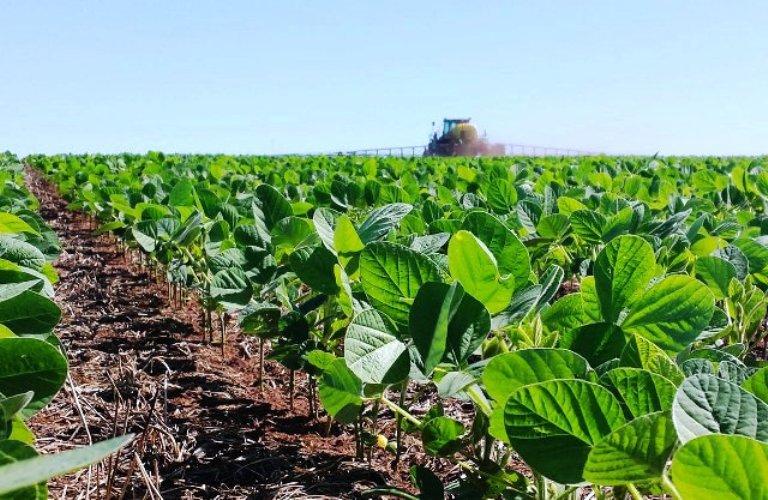 En las próximas semanas estará comenzando la siembra de soja en nuestro país