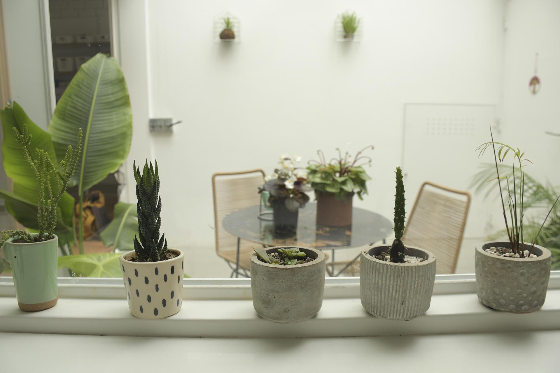 Plantas de interior, una decoración moderna que no falta en ninguna casa