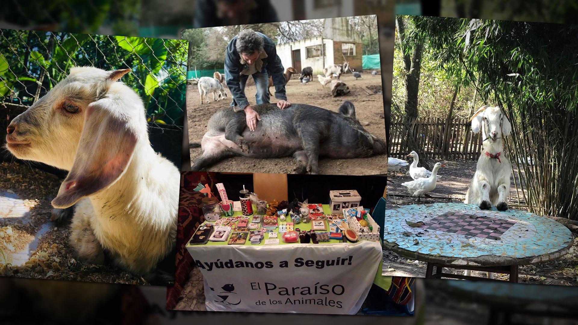 """Todos los animales que ingresan a """"El Paraíso"""" viven sus vidas en libertad, en un hábitat lo más cercano al natural. Las ferias veganas de Capital les dan espacio para juntar donaciones."""