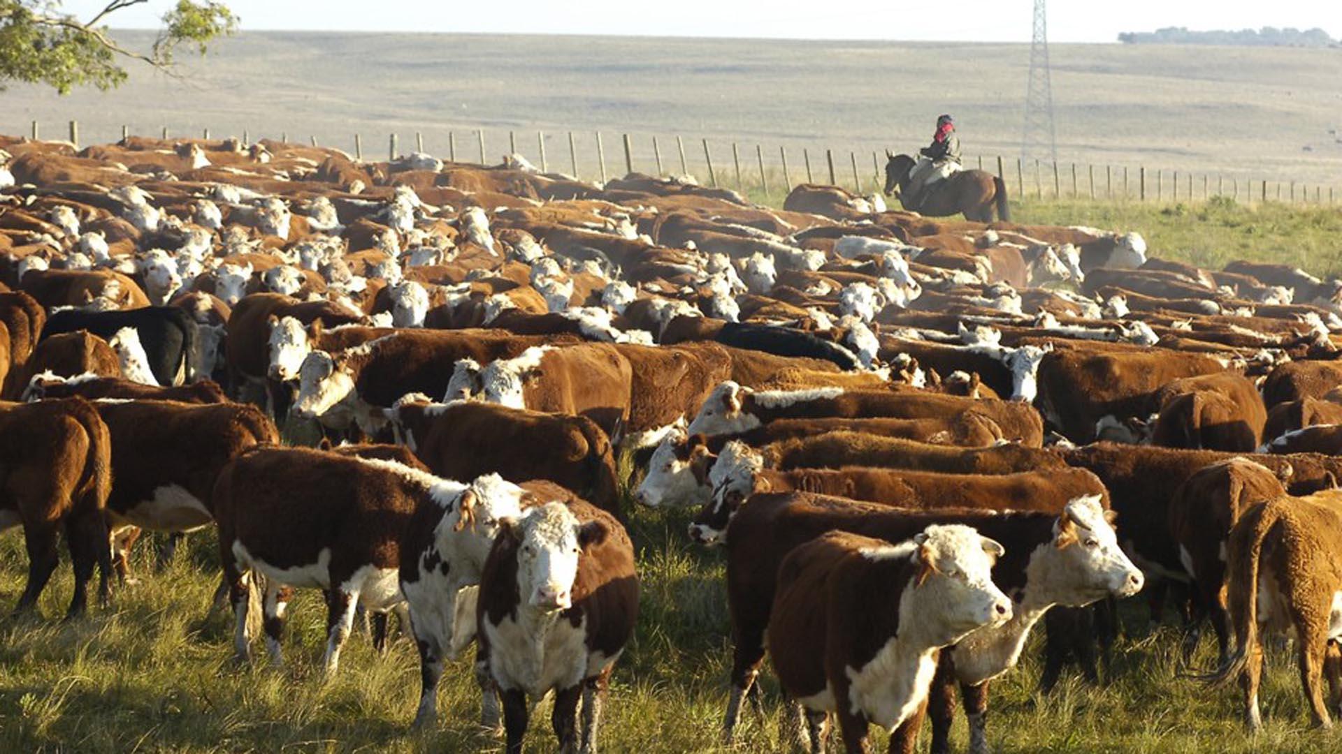 A medida que pasan los años nuestros campos producen menos a causa de los procesos de desertificación