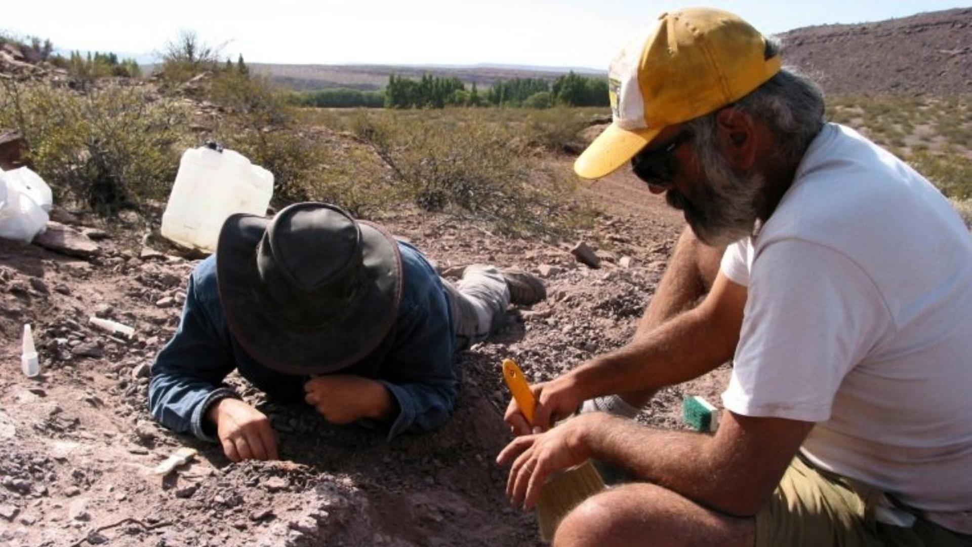 Un equipo de paleontólogos españoles y argentinos hallaron los restos de tres ejemplares de una nueva especie de dinosaurio