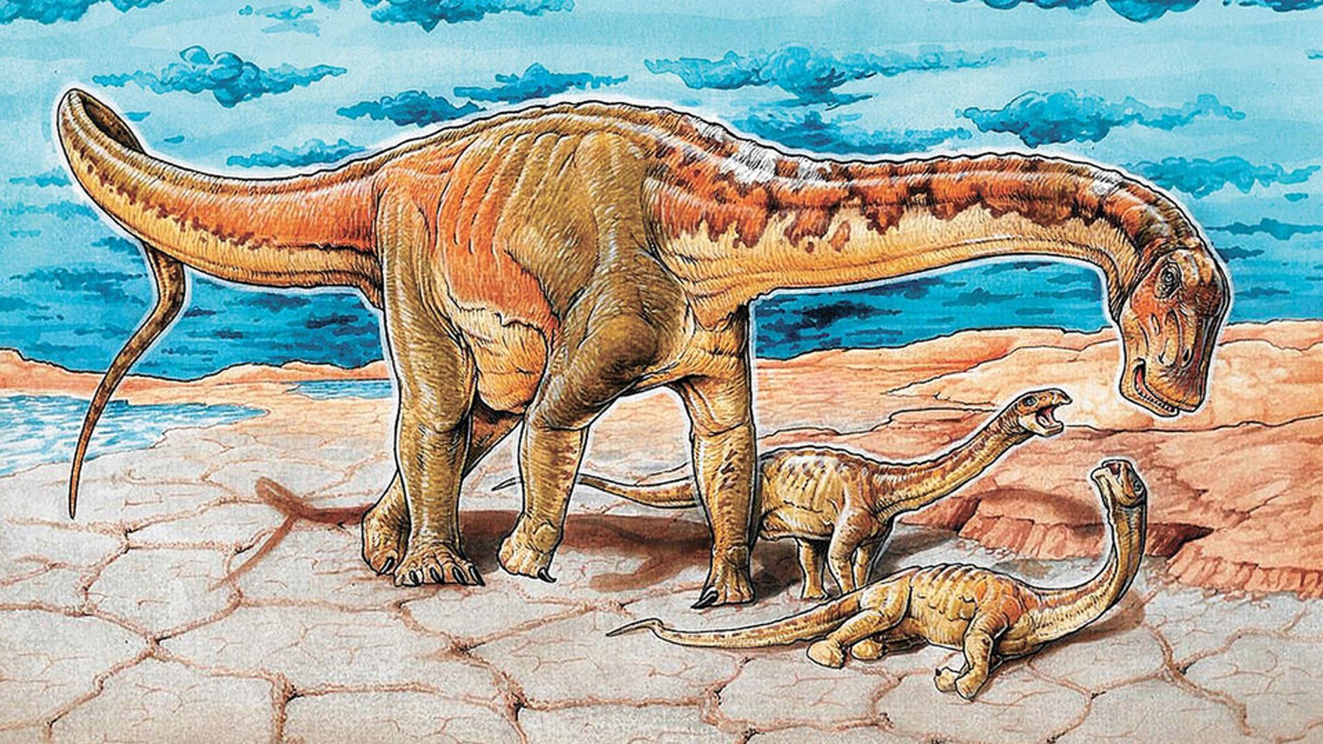 La nueva especie de dinosaurio fue nombrada Lavocatisaurus agrioensis.
