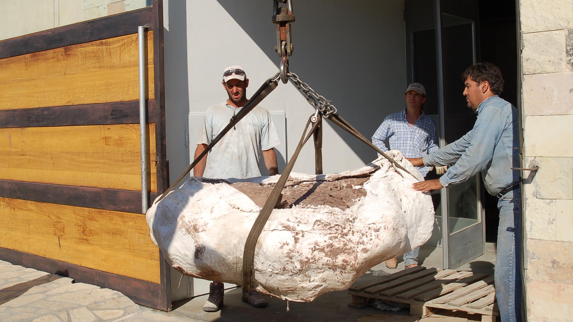 Los restos fueron transportados hasta el laboratorio de análisis