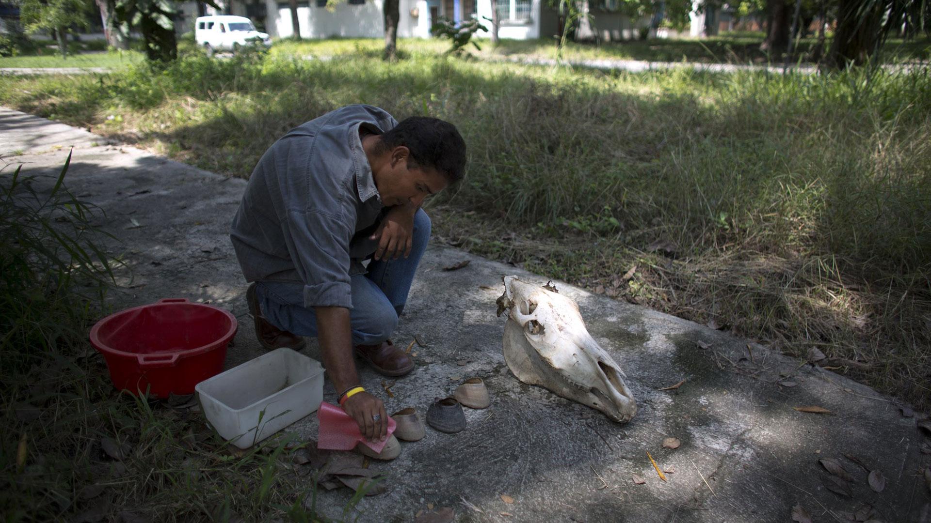 Toro descubrió la piel del animal y sus huesos desmembrados escondidos entre los árboles en el pasto de una esquina del recinto universitario de la ciudad de Maracay