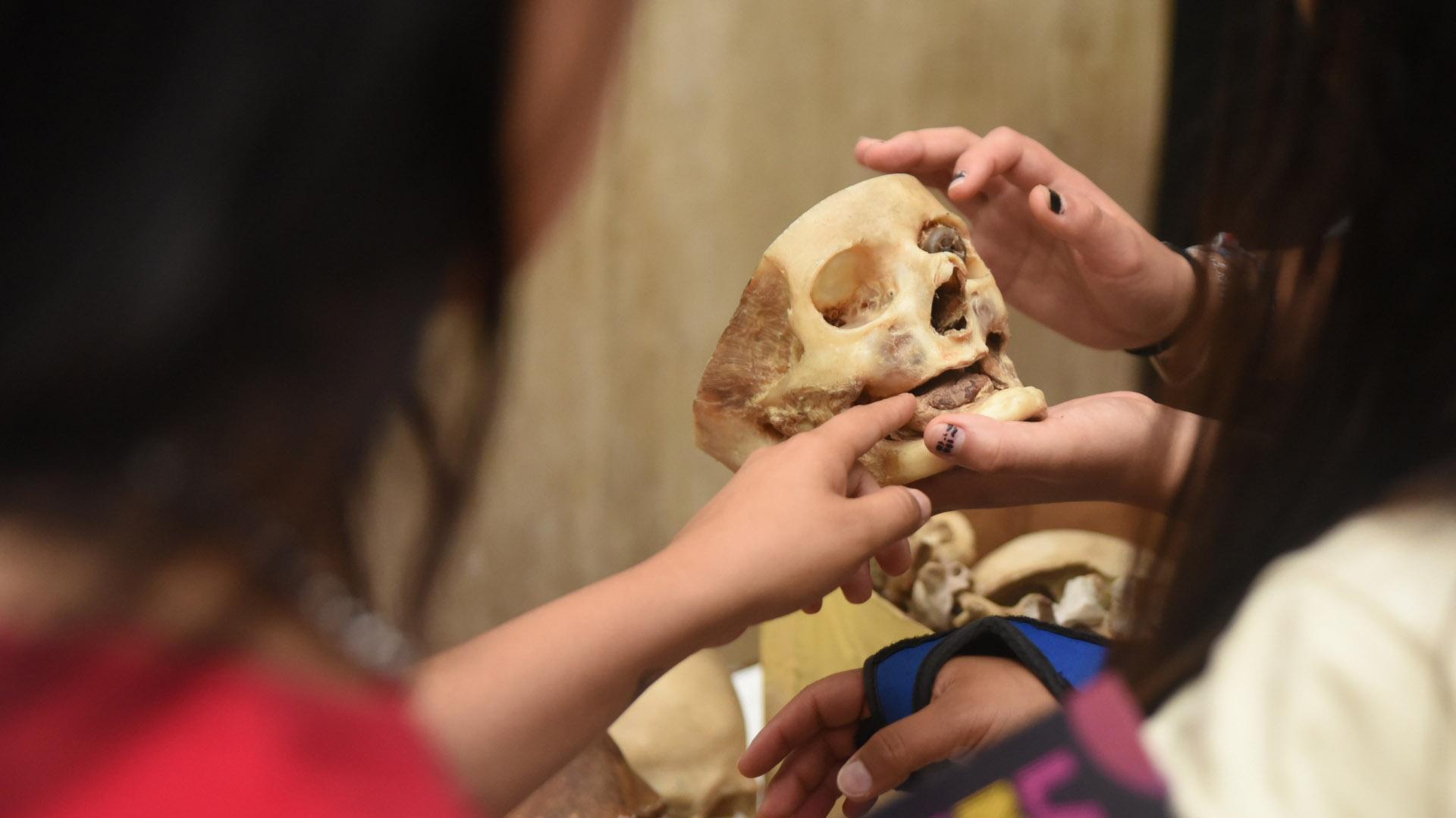 Museo de Anatomía J.J. Naón
