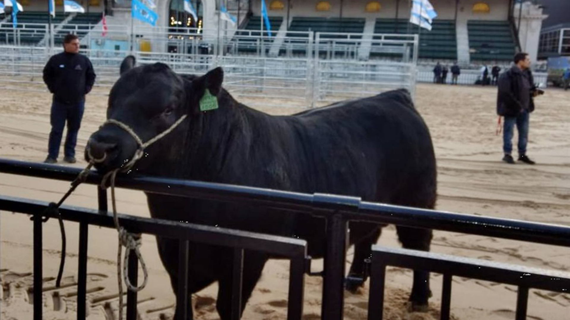 La prueba se extendió por más de 120 días y se evaluaron 43 toros de tres razas,